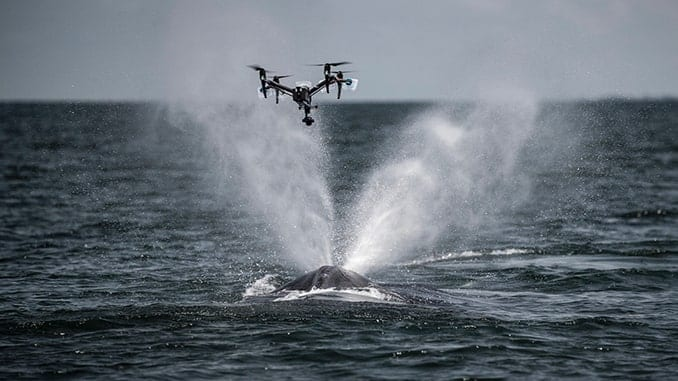 DroneBlocks and Ocean Alliance Partner To Improve SnotBot Project For Whale Conservation