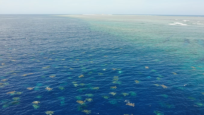 Drone Technology Helps Researchers Count Turtles On The Great Barrier Reef